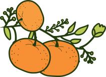 Marmellata di Mandarini   Sicitaly